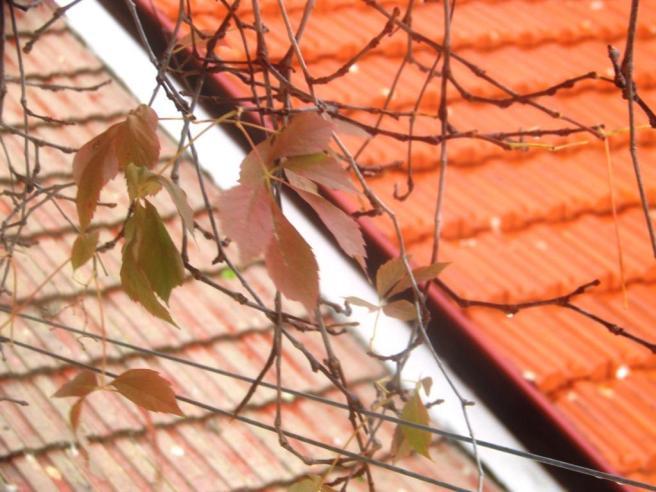 גגות בחורף